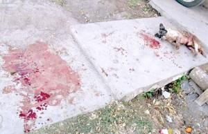 víctimas-de-Pitbull-Mendoza