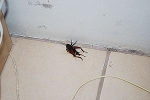 cucaracha-hotel