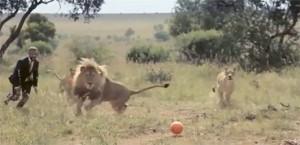 jugando-con-leones-fútbol