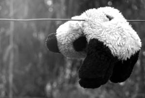 oso-colgado