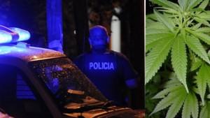 marihuana-San-Isidro