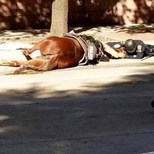 caballo-y-policía