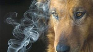 humo-mascotas