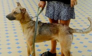 perro-Balcarce
