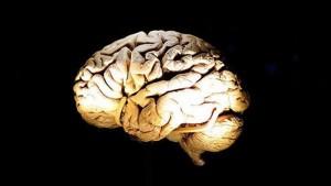 imagen-cerebro