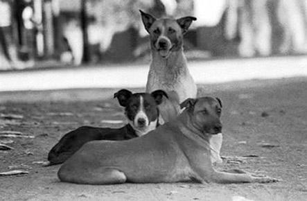 Animales comunitarios | EL SINDICAL